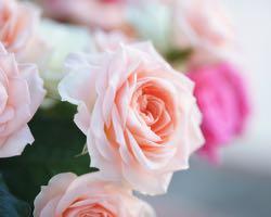 5 Valentine's Day Floral Design Facts